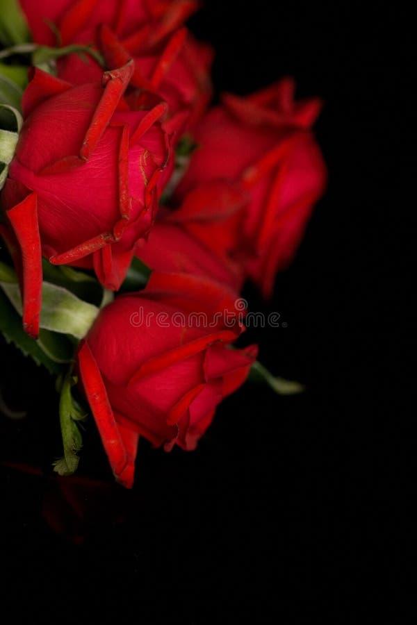 黑色红色玫瑰 免版税库存照片