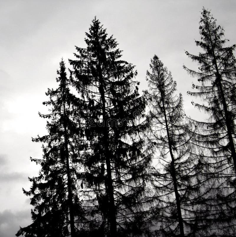 黑色结构树 免版税图库摄影