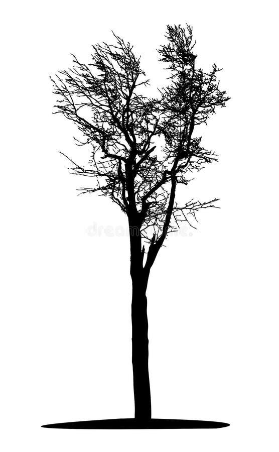 黑色结构树 库存例证