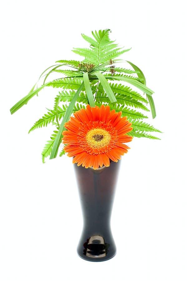 黑色花绿色叶子一花瓶 库存图片