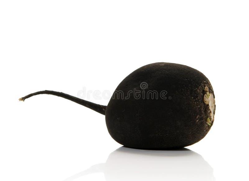 黑色萝卜 免版税库存照片