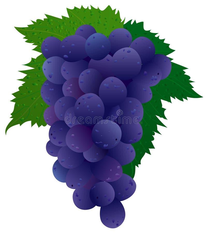 黑色葡萄 库存例证