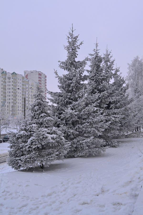 黑色蓝色人行道照片风景定了调子空白冬天森林 斯诺伊天气 镇风景风景  绿色冷杉在冬天城市 免版税图库摄影