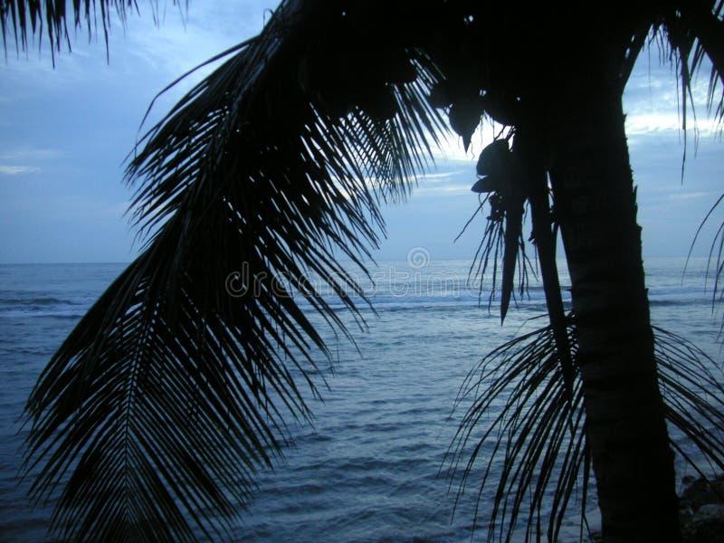 黑色蓝色caribian 免版税库存照片
