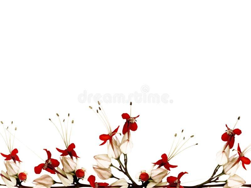黑色蝶粉花红色白色 向量例证