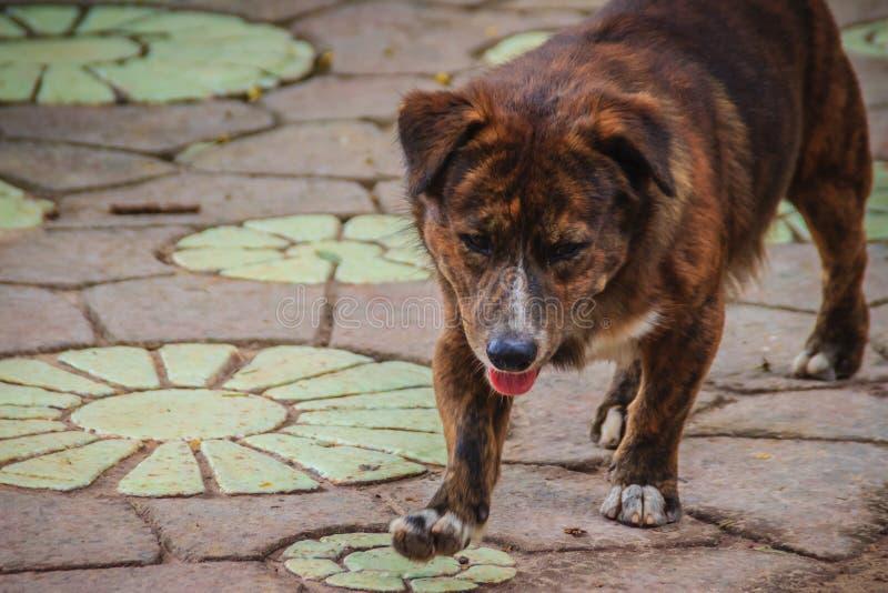 黑色被放弃的无家可归的流浪狗在街道上走 lit. 库存照片