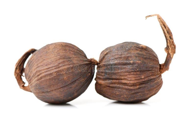 黑色豆蔻果实 免版税图库摄影