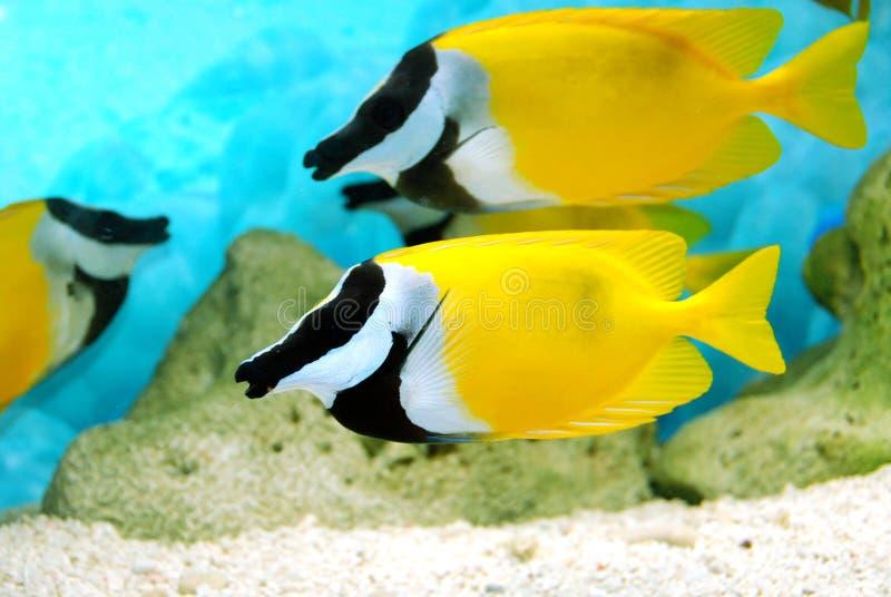 黑色钓鱼黄色 免版税库存图片