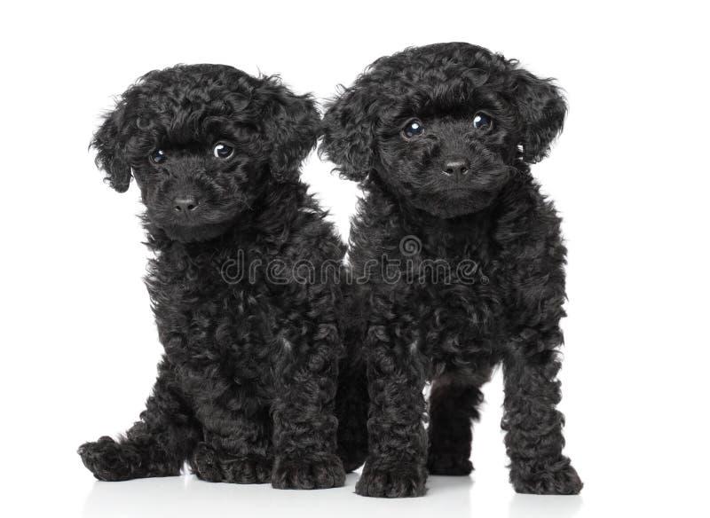 黑色长卷毛狗小狗玩具 库存照片