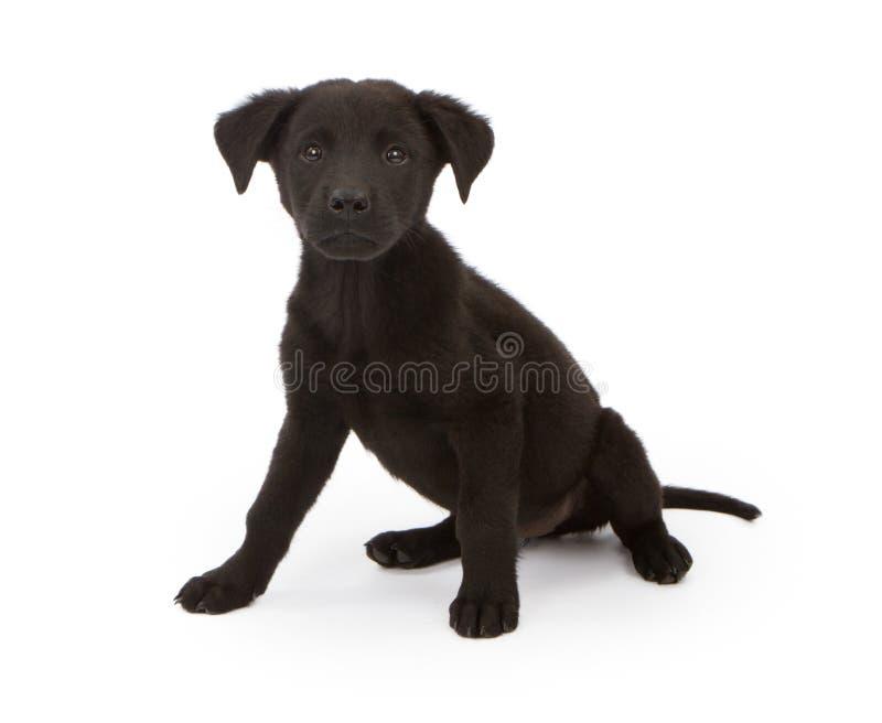 黑色食物混合小狗 库存照片