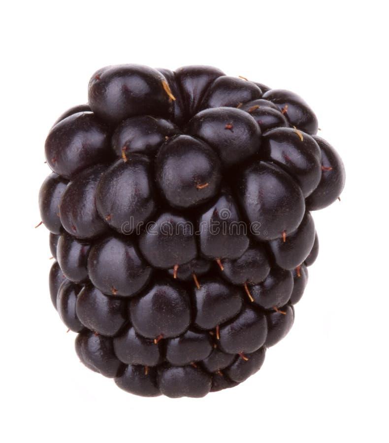 黑莓宏观黑莓的果子 免版税库存图片