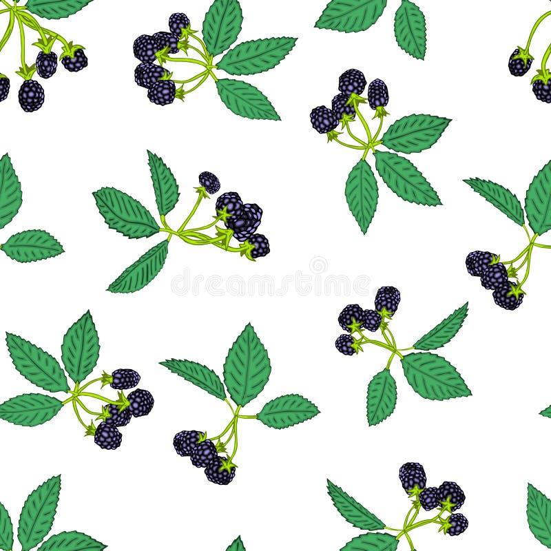 黑莓或莓的无缝的样式 纺织品的莓果背景,墙纸,套图画,盖子,表面 库存例证