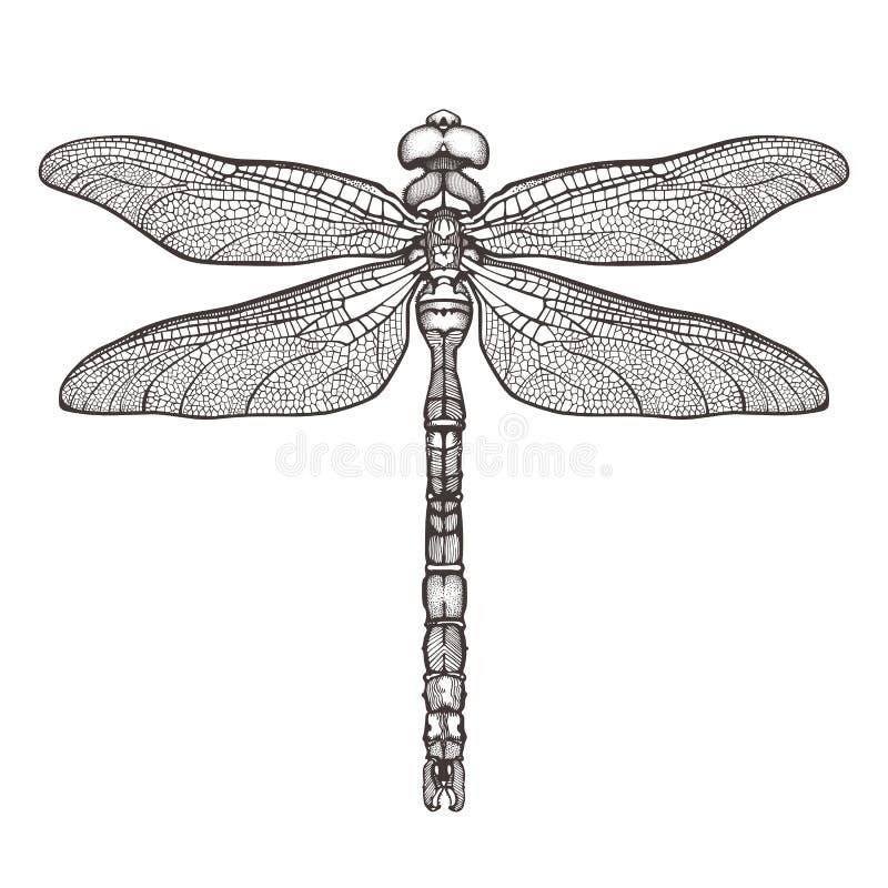 黑蜻蜓Aeschna Viridls,隔绝在白色背景 蜻蜓纹身花刺剪影 彩图 手拉 库存例证
