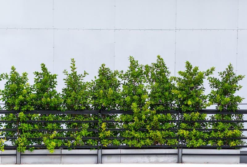 黑金属阳台外部装饰现代大厦 库存照片