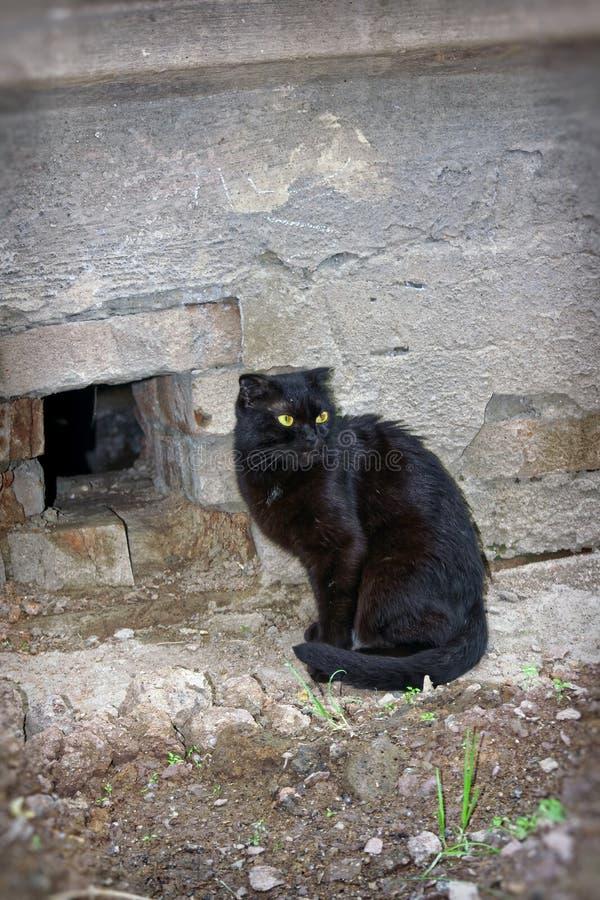 黑颜色一只幼小猫  图库摄影