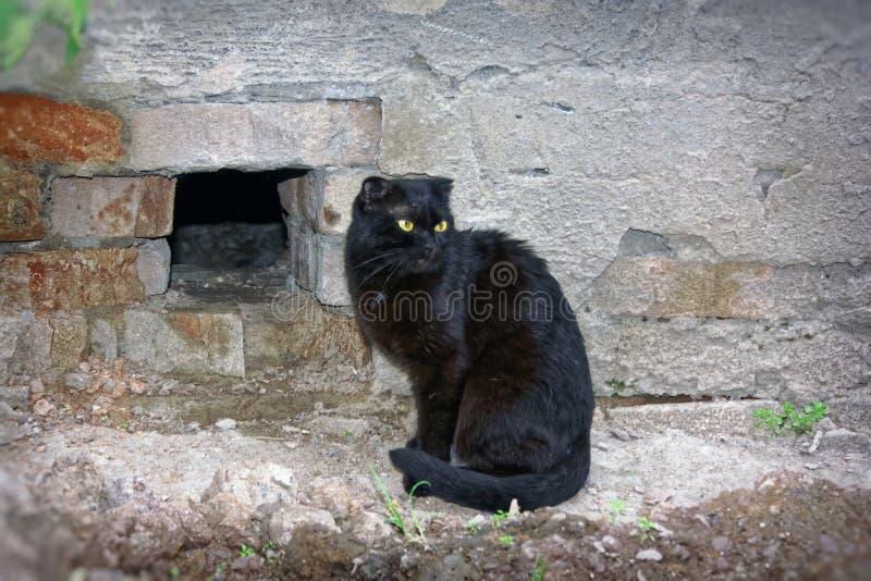 黑颜色一只幼小猫  免版税图库摄影