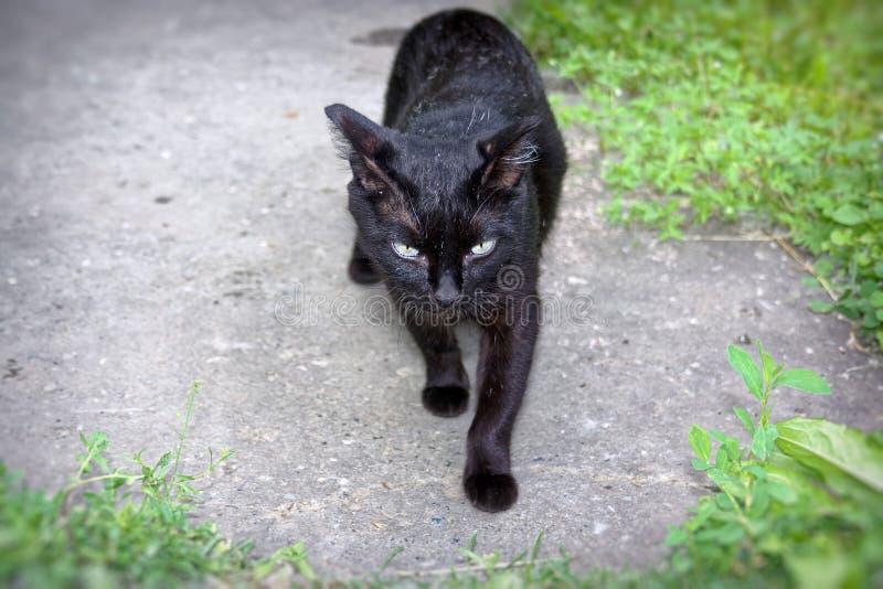 黑颜色一只幼小猫  免版税库存图片