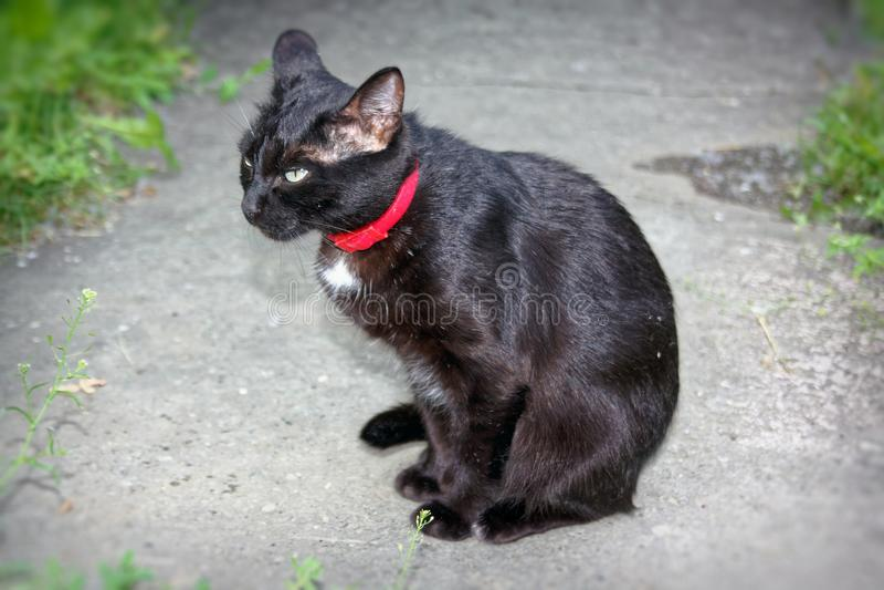 黑颜色一只幼小猫  库存照片