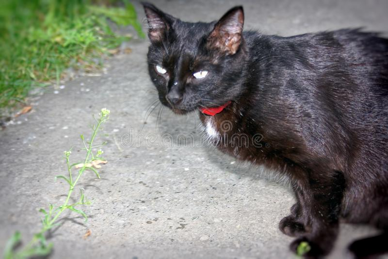 黑颜色一只幼小猫  免版税库存照片