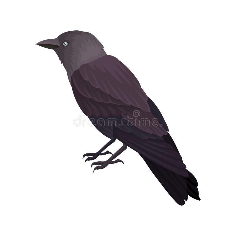 黑鹂详细的传染媒介画象  与黑暗的羽毛和蓝眼睛的鸟 野生生物题材 鸟类学的元素 库存例证