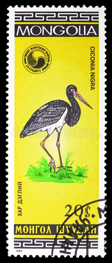 黑鹳Ciconia老黑,鸟serie,大约1985年 库存照片