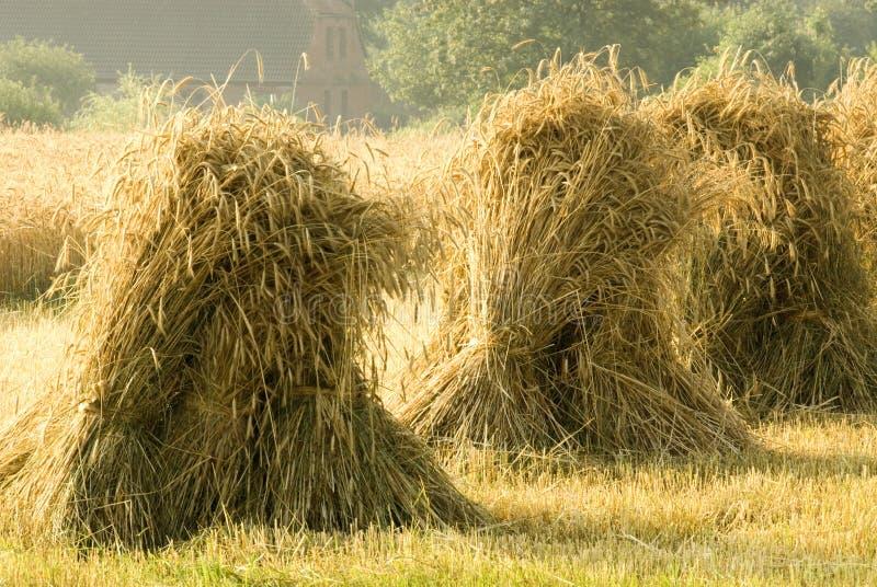 黑麦捆 库存照片