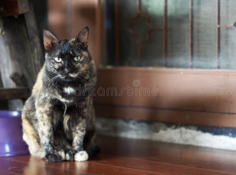 黑黄褐色灰色可爱的孤独的逗人喜爱的老肥胖无家可归的猫 库存照片