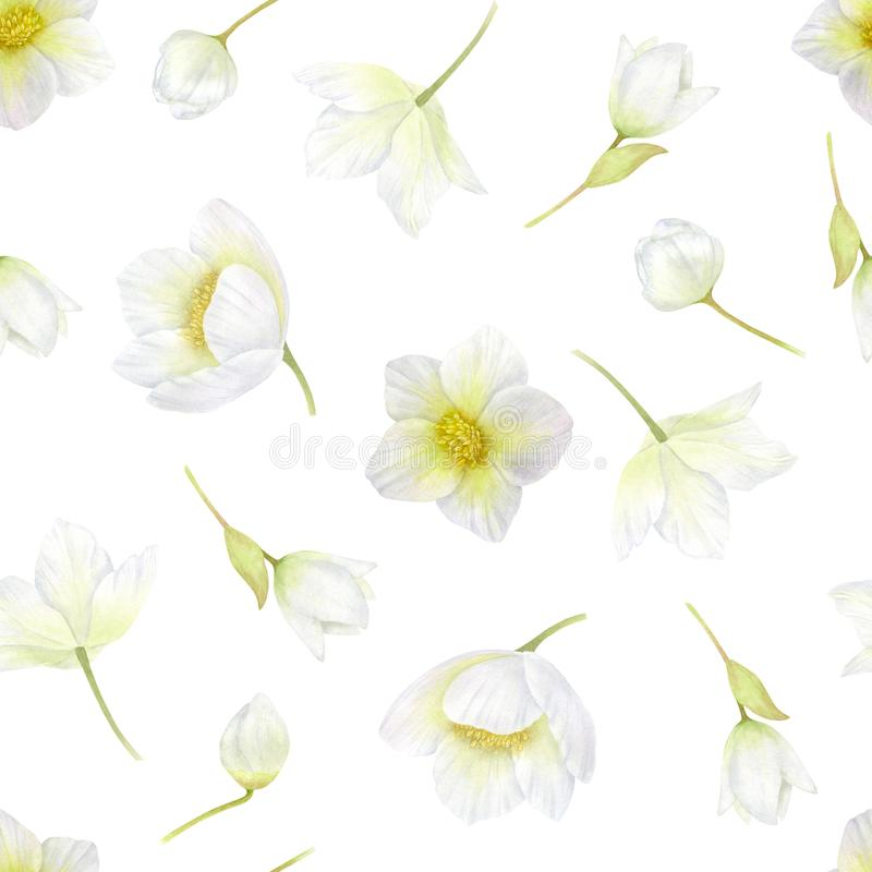 黑黎芦 白花无缝的样式 春天,冬天开花浪漫的水彩或婚礼背景 皇族释放例证