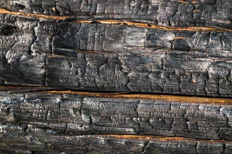 黑,被烧焦的木表面 被烧的针叶树自然本底和纹理  免版税图库摄影