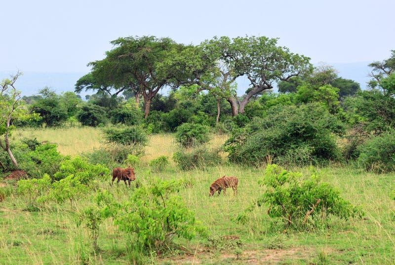默奇森Falls公园,乌干达,非洲 免版税库存照片