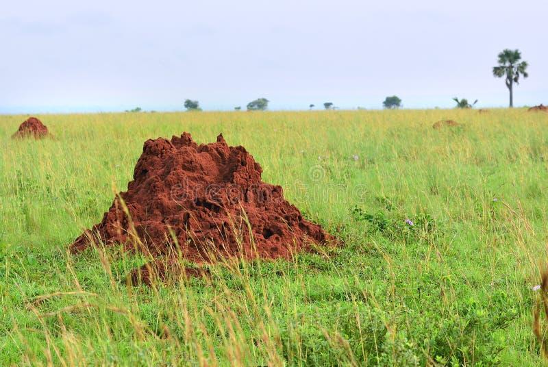 默奇森Falls国家公园风景,乌干达,非洲 库存照片