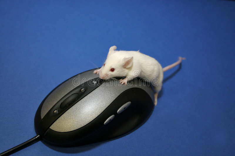 鼠标使用 免版税库存图片