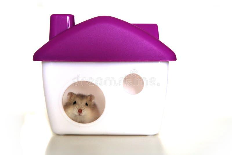 鼠标宠物 免版税库存照片