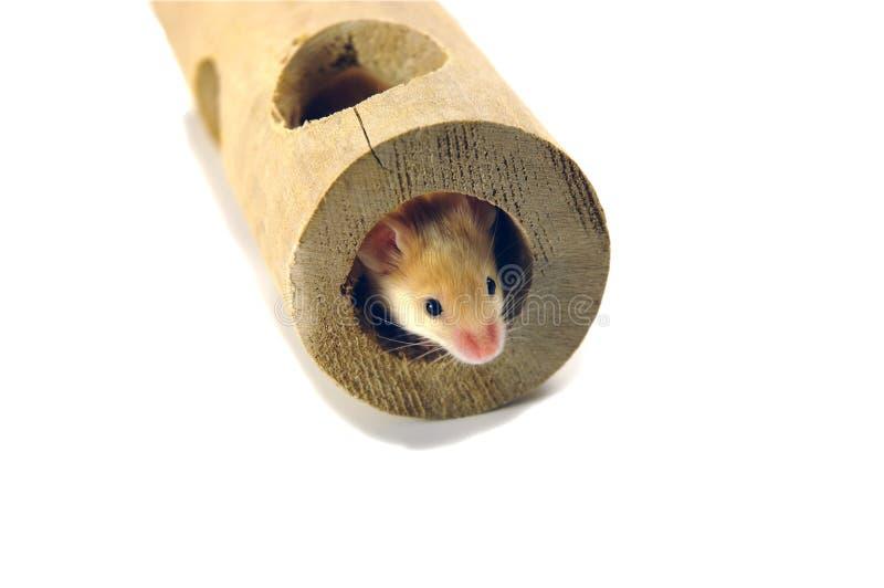 鼠标管 库存图片