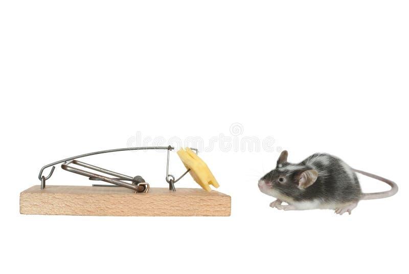 鼠标陷井 免版税库存图片