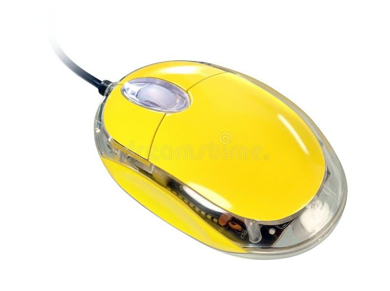 鼠标黄色 库存图片