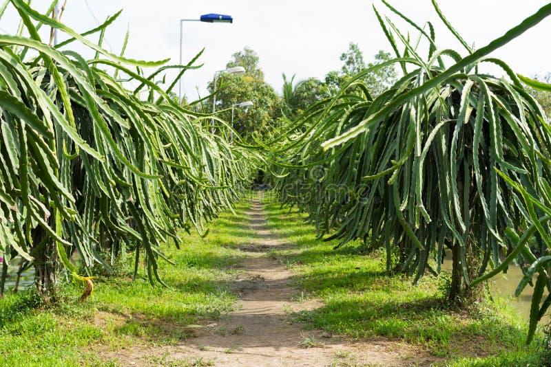 龙湄公河三角洲的果子庭院,越南,亚洲 免版税图库摄影