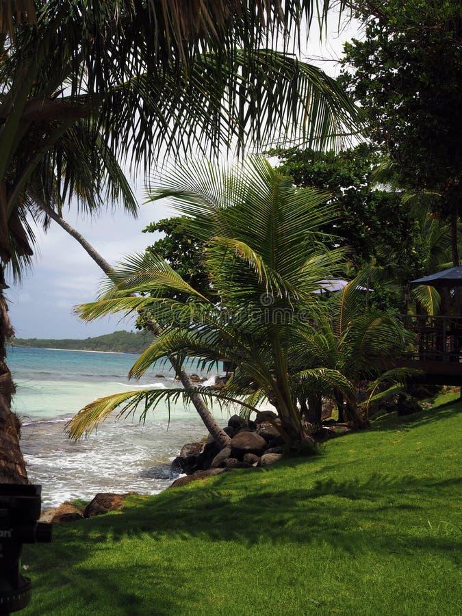 龙湾港口海滩热带树大玉米热带场面  库存图片