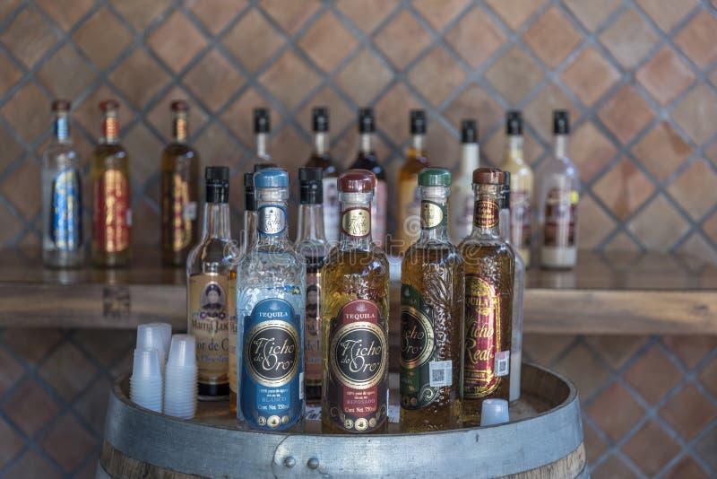龙舌兰酒在Mamà ¡露西娅槽坊普埃尔托巴利亚塔的采样酒吧 免版税库存照片