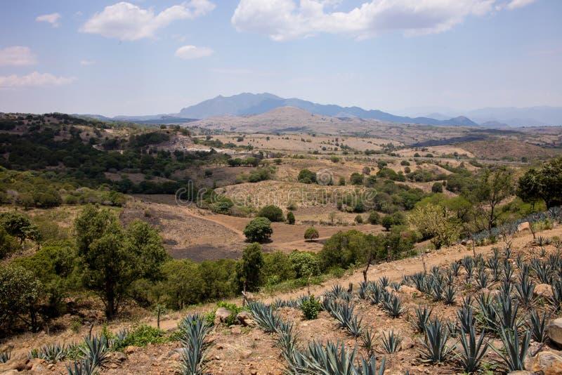 龙舌兰酒,墨西哥 库存照片