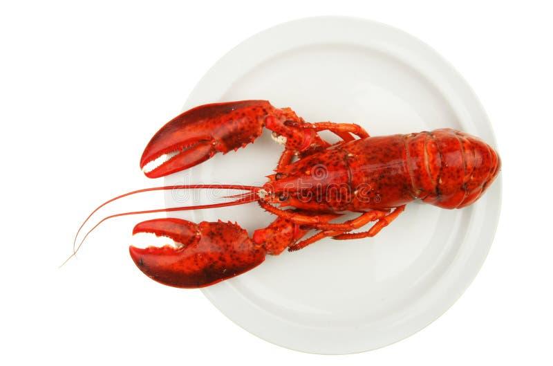 龙虾牌照 免版税图库摄影