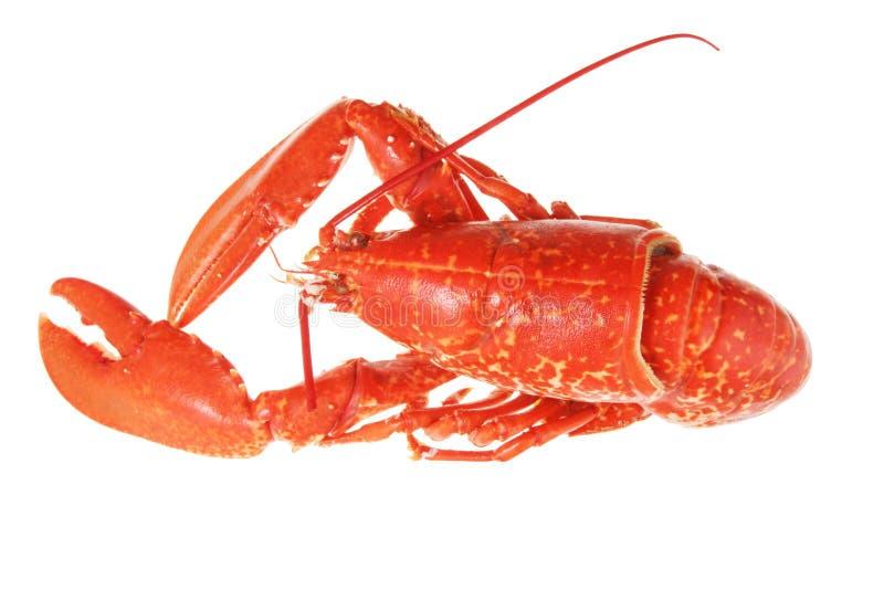 龙虾白色 图库摄影