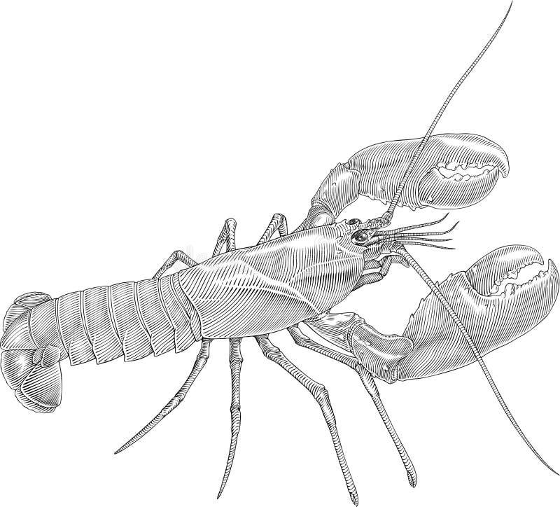 螯龙虾 库存例证