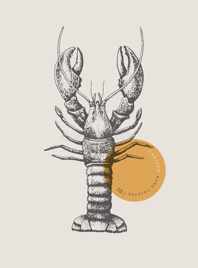 龙虾,画被在轻的背景的图表线 免版税库存照片