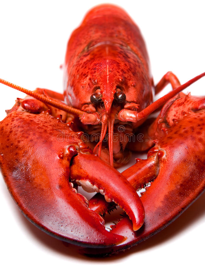 龙虾 库存图片
