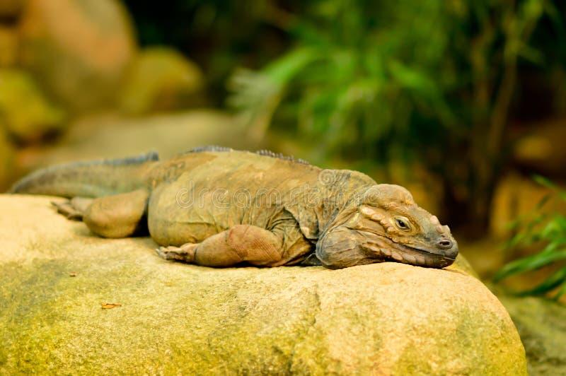 龙蜥蜴的天 库存照片