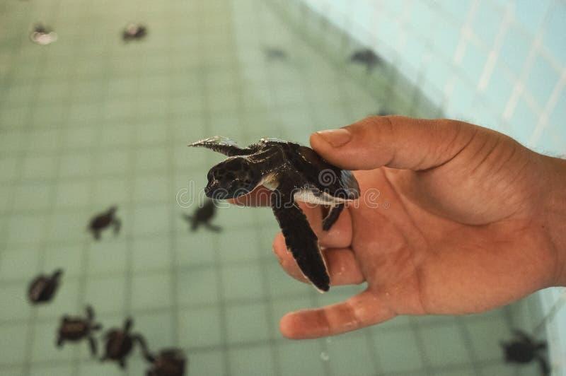 水龟农场,人口的维护的 图库摄影