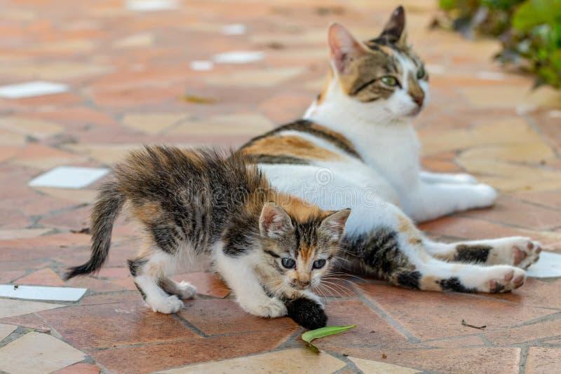 龟甲使用与母亲猫尾巴的小猫求知欲,但是集中于一片绿色叶子 库存照片