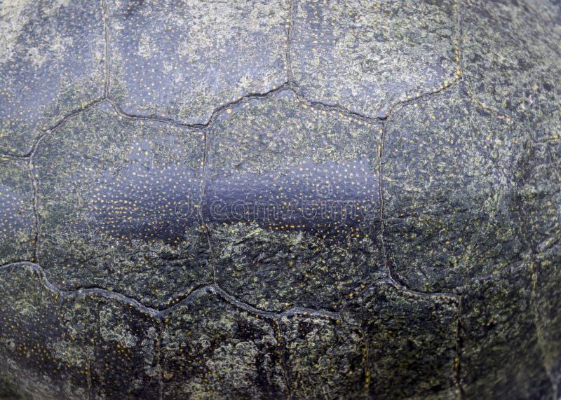 龟甲背景纹理  乌龟壳 免版税库存图片