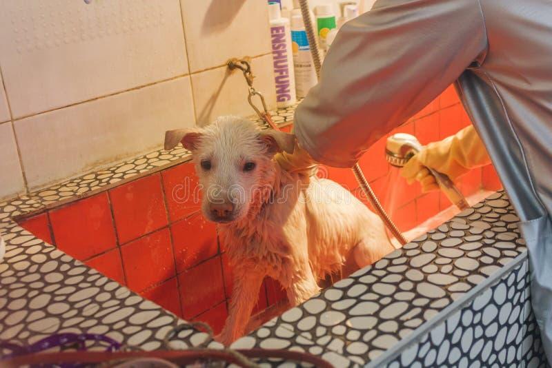 24,中国12月2015年,Chongqi 洗一条哀伤的白色离群街道狗的狩医帮助澡 免版税库存照片